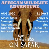 Midlife Madness on Safari
